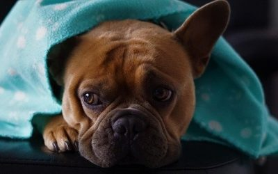 Winter in the Illawarra: Caring for your Pets During the cooler months