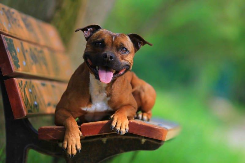 pet care in the illawarra